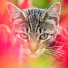 Parque Kennedy, Miraflores (Geraint Rowland Photography) Tags: cat streetcat gato feline kitten catportraits catsofinstagram catsface inparquekennedykennedyparkinmirafores lima peru canonphotography flowers bokeh blur colourful squareformat eyes whiskers visitlima thingstoseeinlima photographytoursinmiraflores mirafloresphotography wwwgeraintrowlandcouk artisticphotography fotografiaenlima geraintrowlandphotography green red greens reds telezoom art catpark