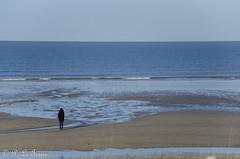 Marée basse sur la côte Normande 09 (letexierpatrick) Tags: maréebase marine marée mer sea maritime plage sable normandie france europe extérieur explore eau nature nikond7000 nikon
