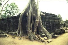Ta Prohm, Angkor (Nina Across the Universe) Tags: cambodia camboya asia analogico angkor templo fujichromer100 fujifilm nikonfm2 nikkor beliveinfilm travel