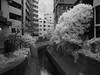Shibuya River (Woodenship) Tags: tokyo shibuya japan river infrared photography