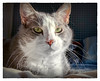 Mr Whiskers (Timothy Valentine) Tags: 0418 whiskers home quinnomannion happycaturday cat 2018 eastbridgewater massachusetts unitedstates us
