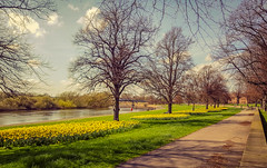Springtime on the Embankment (Ian Emerson) Tags: nottingham nottinghamshire lovenotts spring weather daffodils outdoor embankment trent rivertrent trees wall footpath working sunny sunbathers clouds