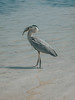 Anna Maria Island (salmakerfal) Tags: beach ami anna maria island fl florida sunrise sunset nature vacation