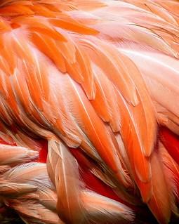 Orange Is The New Pink