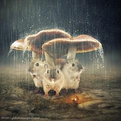 in the rain (evenliu photography) Tags: dream surreal photomanipulation photoshop visual art fine imagine heaven evenliu digital