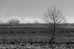 San Jacinto B&W (markandca) Tags: sanjacintowildlifearea landscape fields tree desolate bleak blackwhite bw