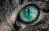 Abstract Cat Eye (Cminor_photography) Tags: cat kitty catphotography pet meow nature natgeo naturephotography wildlife wildlifephotography canada canon canonphotography london love cute evil eye eyes cateye macro macrophotography colour beautiful ontario life live cminor kitten fur north