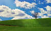 through open windows (a.k.a the growth of Bliss) (cherryspicks (off)) Tags: landscape clouds spring tree hill nature green windows7 microsoft grass light windowsxp
