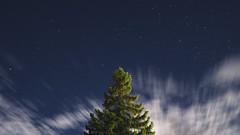 (Weche Peumafe) Tags: cielos cielo noche nocturno árbol estrellas sony alpha 77m2 ilca patagonia sur chile exposicion click