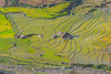 File595.0617.Trồng Tồng.Lìm Mông.Cao Phạ.Mù Cang Chải.Yên Bái (hoanglongphoto) Tags: asia asian vietnam northvietnam northwestvietnam landscape scenery vietnamlandscape vietnamscenery vietnamscene terraces terracedfields terracedfieldsatvietnam transplantingseason sowingseeds afternoon sunny sunnyafternoon sunnyweather valley flanksmountain hdr canon tâybắc yênbái mùcangchải caophạ phongcảnh ruộngbậcthang ruộngbậcthangmùcangchải thunglũng mùacấy đổnước mùacấymùcangchải đổnướcmùcangchải sườnnúi buổichiều nắng nắngchiều bóngđổ abstract trừutượng curve đườngcong trồngtồng thunglũngcaophạ canoneos1dx canonef500mmf4lisiiusm