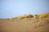 DUNE (terziluciano) Tags: dune ammophila