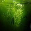 Grüne Perlengalaxis - green bubble galaxy (greenoid) Tags: perlen blasen sauerstoff algen sonne sonnenlicht sun sunlight oxygen bubbles green black