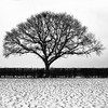 The Cold Tree (FujiRob) Tags: tree beverleywestwood beverley fujifilmxe2 blackandwhite bw squareformat square cold winter greyskies hedge grass snow eastyorkshire silverefex acdsee