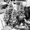 Dwarfs oh horror (Fotofabrik Itzehoe) Tags: garden itzehoe fotofabrik garten china sonderposten holstein schnappschuss blackandwhite dwarfs zwerge