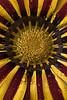 Sunrising flower's style (marcello.machelli) Tags: daisy margherita red yellow giallo rosso nikon sigma nicefoto macro focusstacking sunrising alba details dettagli fiore flower finearts drops whater acqua gocce