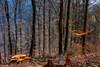 21032018-21032018-DSC_0017 (vidjanma) Tags: arbres forêt hêtres lumière souche