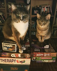 """The game is over when everybody is dead."" (rachelhartleysmi) Tags: fun games cats kitties kittens monopoly boardgames funny evil clue dangerous cat pets fantastic"