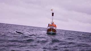 Whale Watching from Húsavík IV