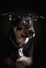 Skylar (GideonAJWay) Tags: pet dog animal portrait moody strobe halo idea family fun beauty