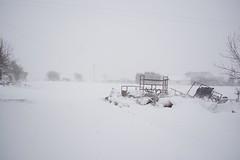 DSC_8003 (seustace2003) Tags: baile átha cliath ireland irlanda ierland irlande dublino dublin éire glencullen gleann cuilinn st patricks day zima winter sneachta sneg snijeg neve neige inverno hiver geimhreadh