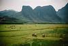 Phong Nha critters (dogslobber) Tags: phong nha ke bang vietnam vietnamese south east asia karst mountains formations hills mountain hill geological geology rock rocks livestock water buffalo