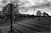 A moment amidst symbols - Moscow (Keystone Photography) Tags: repacholi keystone moscow russia pentaxk5 mono monotone blackandwhite urban europe symbol love lock tree couple pattern perspective wide