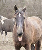 Theme (shannon_blueswf) Tags: horses horse equestrian horselife complex silly pet petphotography petportrait amimals portraits pony nikon nikond3300 nikonphotography nature naturephotography farm horsefarm horsephotography horseportrait