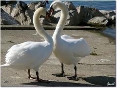 L'amour est dans l'air ... Love is in the air .... (+ 3 photos) (Jogabi - Michèle) Tags: coth5 ngc sunrays5 npc