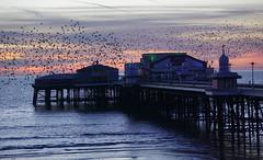 Blackpool Murmuration (JamieHaugh) Tags: blackpool lancashire england uk gb greatbritain outdoors starlings sony a6000 murmuration birds pier sea sunset evening coast seaside beach water sky color colour ilce6000 zeiss