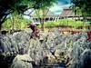 Bahagian Kuching, Sarawak https://goo.gl/maps/aYZRh8m35AH2  #travel #holiday #Asian #Malaysia #Sarawak #Kuching #travelMalaysia #holidayMalaysia #旅行 #度假 #亚洲 #马来西亚 #沙拉越 #古晋 #trip #马来西亚旅行 #traveling #马来西亚度假 #garden #rock #rockgardenbau #石头 #猴子 #monkey (soonlung81) Tags: trip sarawak 猴子 石头 沙拉越 度假 traveling 古晋 马来西亚 malaysia monkey garden 马来西亚度假 holiday kuching 旅行 亚洲 马来西亚旅行 rock travelmalaysia rockgardenbau holidaymalaysia travel asian