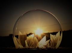 Last of the Bubbles..x (Lisa@Lethen) Tags: bubble freezing frozen frost weather macro morning sunrise dawn