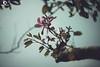 水墨?  Chinese Ink Paintings? (ORANGEREPUBLIC) Tags: dramatic photolovers sonya7r2 cinematography chineseinkpainting orangerepublic vintage canonef100l lightroom fullframe bokeh beautifulbokeh dreamlikeadream