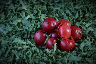 Pink Peppercorns & Parsley