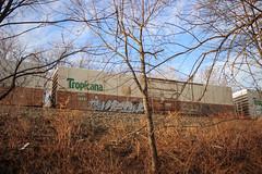 Meca (NJphotograffer) Tags: graffiti graff trackside track railroad rail art freight train bench benching reefer refrigerated car tropicana meca ta md crew