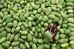 Working with Watermelon (Anindita Roy(RupKotharChobi)) Tags: watermelon worker nikon d5500 people portrait dhaka bangladesh pattern fruits