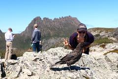 IMG_8354 (B for Baguettes) Tags: australie australia seeaustralia tasmanie travel roadtrip traveller voyage vacances tasmania ontheroad explore canon canon700d 700d sigma sigma1835 nature downunder sky wildlife cradlemountain cradlemountainnp currawong