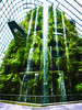 Green Clouds (Steve Taylor (Photography)) Tags: cloudforest singapore gardensbythebay waterfall walkway art architecture digital garden railing green white black contrast window water asia plant flora foliage forest texture