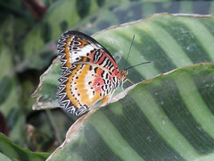 P4190137 (Steve Guess) Tags: horniman museum butterfly forest hill london england gb uk