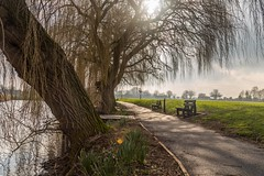 The Carrs Nottinghmshire ❤❤ (Photo_stream_this) Tags: the carrs nottinghamshire trees water path grass benches