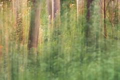 sous-bois (Guit07) Tags: bois arbres sousbois