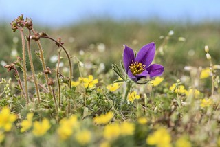 *spring meadow* - *Frühlingswiese*