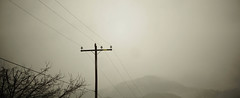 Atop (Austin Barton) Tags: bird wildlife telephone line los angeles mountains clouds rain dark greenery high mist gloomy storm