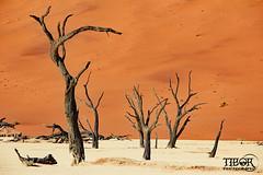 Deadvlei (morbidtibor) Tags: africa namibia desert dunes tree dead deadvlei sossusvlei