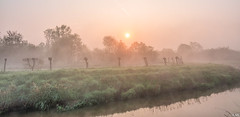 Foggy at Sunrise (Martine Lambrechts) Tags: foggy sunrise fog nature landscape morning waterway tree