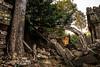 Angkor       Preah Khan (JB_1984) Tags: preahkhan temple stone ruins decay tree light shadow khmer siemreap krongsiemreap cambodia cambodge kampuchea nikon d500 nikond500