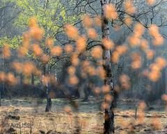 Frühling - Spring - Printemps - Primavera - De Lente (ARTUS8) Tags: flickr blume frühling baum landschaft nikond800 nikon24120mmf40 tree flower