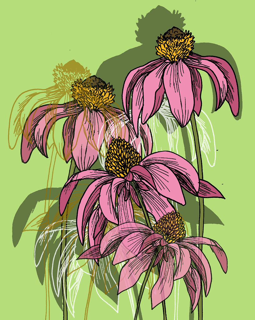 Line Drawing Coneflower : The world s newest photos of contour flickr hive mind