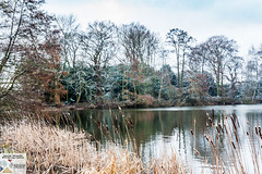OPark_DSC8651 (Nick Woods Photography) Tags: landscape waterscape waterreflections waterscene lake lakescene pond pondscene water snow winter winterscene trees freshwater cold osterley osterleypark nationaltrust nt