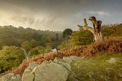 Bradgate Park (John__Hull) Tags: bradgate park autumn landscape trees ferns bracken leicestershire newtown linford uk england clouds nikon d3200 sigma 1020mm breath taking landscapes