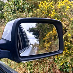 Looking back (Explored) (JulieK (thanks for 6 million views)) Tags: gorse carwindow rearviewmirror reflection lane wexford ireland irish iphonese green foliage flowers inexplore squareformat